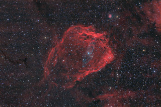 The Flying Bat and Squid Nebulae in HaOIIIRGB